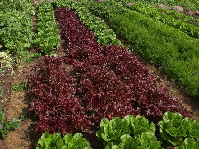 חקלאות אורגנית במצפה אלומות
