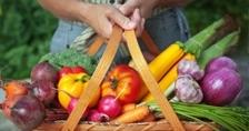 תת לחץ דם טיפול טבעי חוות אלומות